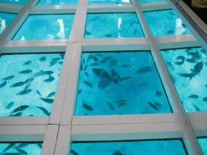 glass-boat-Snorkeling-ou-mergulho-na-ilha-de-Tiran.2 (1)